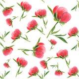 Pink peony bud on white background. Seamless watercolor pattern Stock Photo