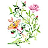 Pink peony with butterfly floral botanical flower. Watercolor background set. Isolated ornament illustration element. Pink peony with butterfly floral botanical royalty free stock photos