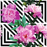 Pink peony floral pattern, geometric black and white background Royalty Free Stock Photography