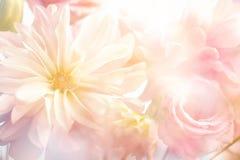 Free Pink Peony Flower Background Stock Image - 68460101