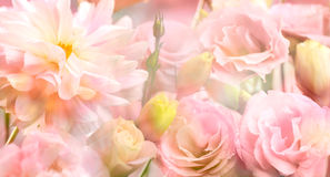 Pink peony flower background Royalty Free Stock Photos