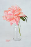Pink peony flower. Beautiful pink peony flower in a vase on a table Stock Image