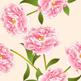 Pink Peony Flower on Beige Ivory Background. Vector Illustration Royalty Free Stock Image