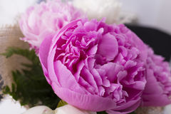 Pink peony flower bouquet close up Royalty Free Stock Photos