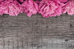 Pink peony flower on dark rustic wooden background with copy spa Royalty Free Stock Images