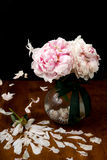 Pink peony flower falling from glass vase, petals in the air. Stock Images