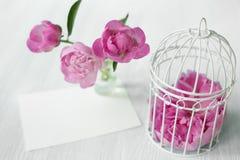 Pink peony flower. Royalty Free Stock Photo