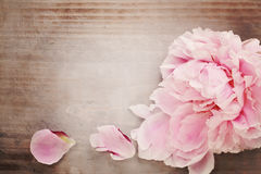 Pink Peony Flower on Vintage Wooden Background Stock Photos