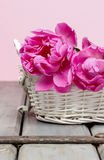 Pink peony flower in white wicker basket Stock Photos