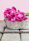 Pink peony flower in white wicker basket Stock Images