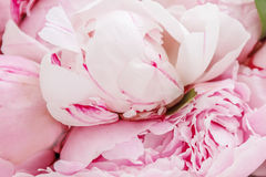 Pink peony flowers in basket Stock Photos