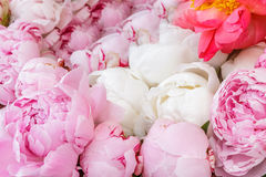 Pink peony flowers in basket Royalty Free Stock Photo