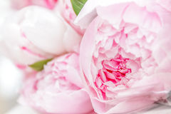 Pink peony flowers in basket Royalty Free Stock Photos