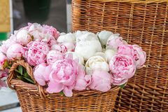 Pink peony flowers in basket Stock Images