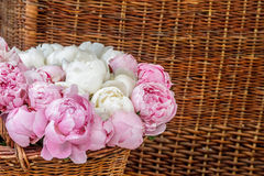 Pink peony flowers in basket Royalty Free Stock Photography