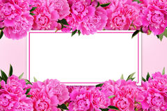 Pink peony flowers borders and a card. On pink background Royalty Free Stock Photography