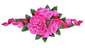 Pink peony flowers bouquet and a silk spotted ribbon Stock Photos