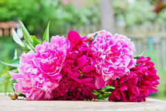 Pink peony flowers bouquet Royalty Free Stock Photo