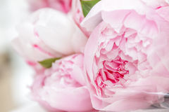 Pink Peony Flowers In Basket Stock Image