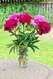 Pink peony flowers in vase Stock Images