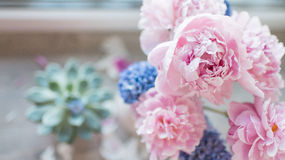 Pink peony and hyacinth Stock Photos