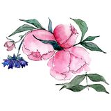 Pink peony. Isolated flower illustration element. Background set. Watercolour drawing aquarelle bouquet. Pink peony. Floral botanical flower. Isolated flower stock illustration