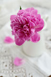 Pink peony in jug on vintage lace tablecloth Stock Photos
