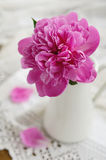 Pink peony in jug on vintage lace tablecloth Stock Photo