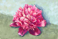 Pink peony painting Stock Images