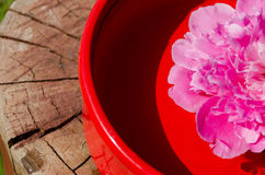Pink peony petals in clay bowl on wooden surface Stock Images