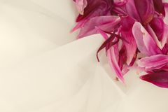 Pink peony petals on white tulle Stock Images