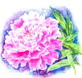 Pink peony reveals fragrant petals vector illustration