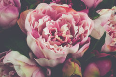 Pink Peony Rose Flower Vintage Close-up. Detailed look of bouquet pink peony rose flowers, vintage style Royalty Free Stock Photography