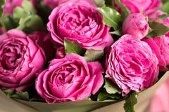 Pink peony roses in vase. retro styled photo. Royalty Free Stock Image