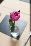 A pink peony strand in a transparent glass vase Stock Photography