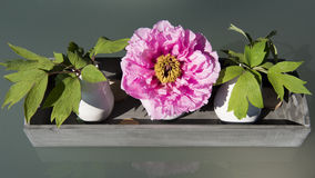 Pink peony table decoration Stock Photo