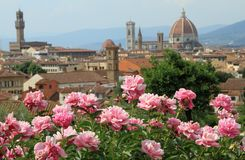 Pink peony and view of renaissance town of Florenc Royalty Free Stock Photo