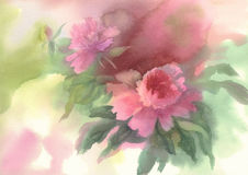 Pink peony watercolor. Bouquet of pink peonies watercolor illiustration pastel colors Royalty Free Stock Photo