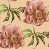 Pink peony  watercolor bouquet on a pink background seamless pattern Stock Photos