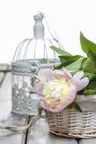 Pink peony on white vintage birdcage Stock Image