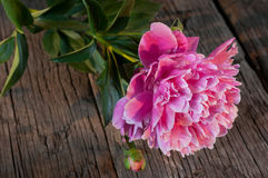 Pink peony on a wooden table. Royalty Free Stock Photos