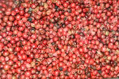 Pink pepper grains. The Peruvian pepper or pink pepper, in whole grains on a white background Royalty Free Stock Photo