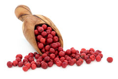 Pink Peppercorns Royalty Free Stock Image