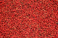 Pink peppercorns background Stock Images
