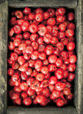 Pink peppercorns Stock Photo