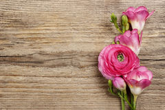 Pink persian buttercup flower and freesia flower Royalty Free Stock Photography