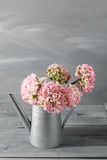 Pink persian buttercup flowers. Curly peony ranunculus in Metallic gray vintage watering can, copy space. Stock Image
