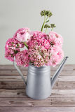 Pink persian buttercup flowers. Curly peony ranunculus in Metallic gray vintage watering can, copy space. Stock Images