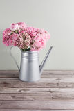 Pink persian buttercup flowers. Curly peony ranunculus in Metallic gray vintage watering can, copy space. Royalty Free Stock Images