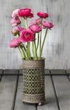 Pink persian buttercup flowers (ranunculus) Stock Photography
